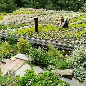 Los diez beneficios de los tejados verdes